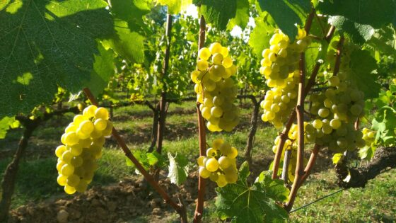 Franciacorta on the road